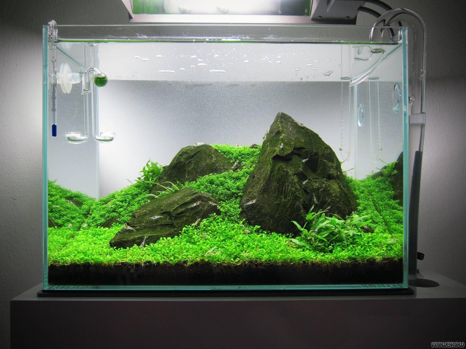 Iwagumi Underwater Landscape Akuarium