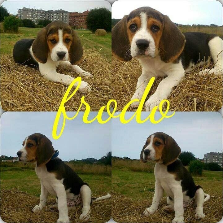 Aqui esta Frodo