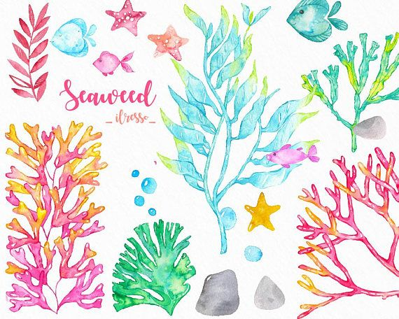 Watercolor seaweed clipart, ocean clipart, fish starfish nautical ...
