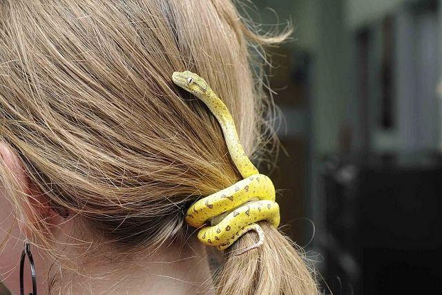 Un serpent pour attacher ses cheveux Animales, Animaux