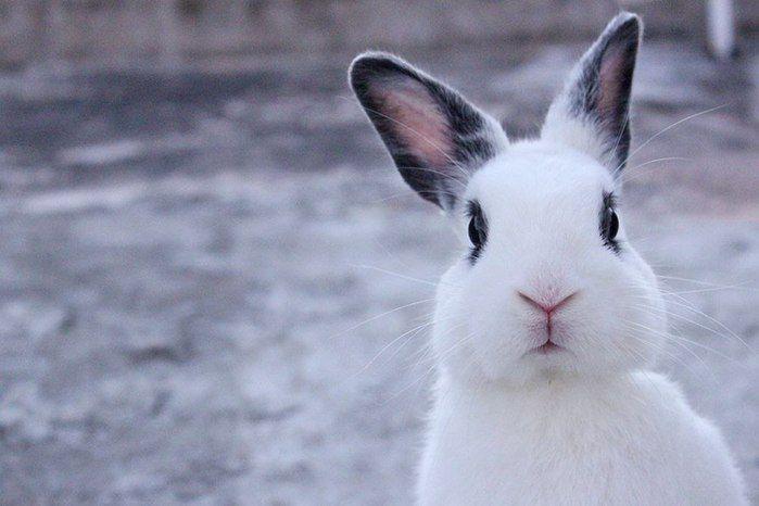 Вербной, веселые картинки про зайцев