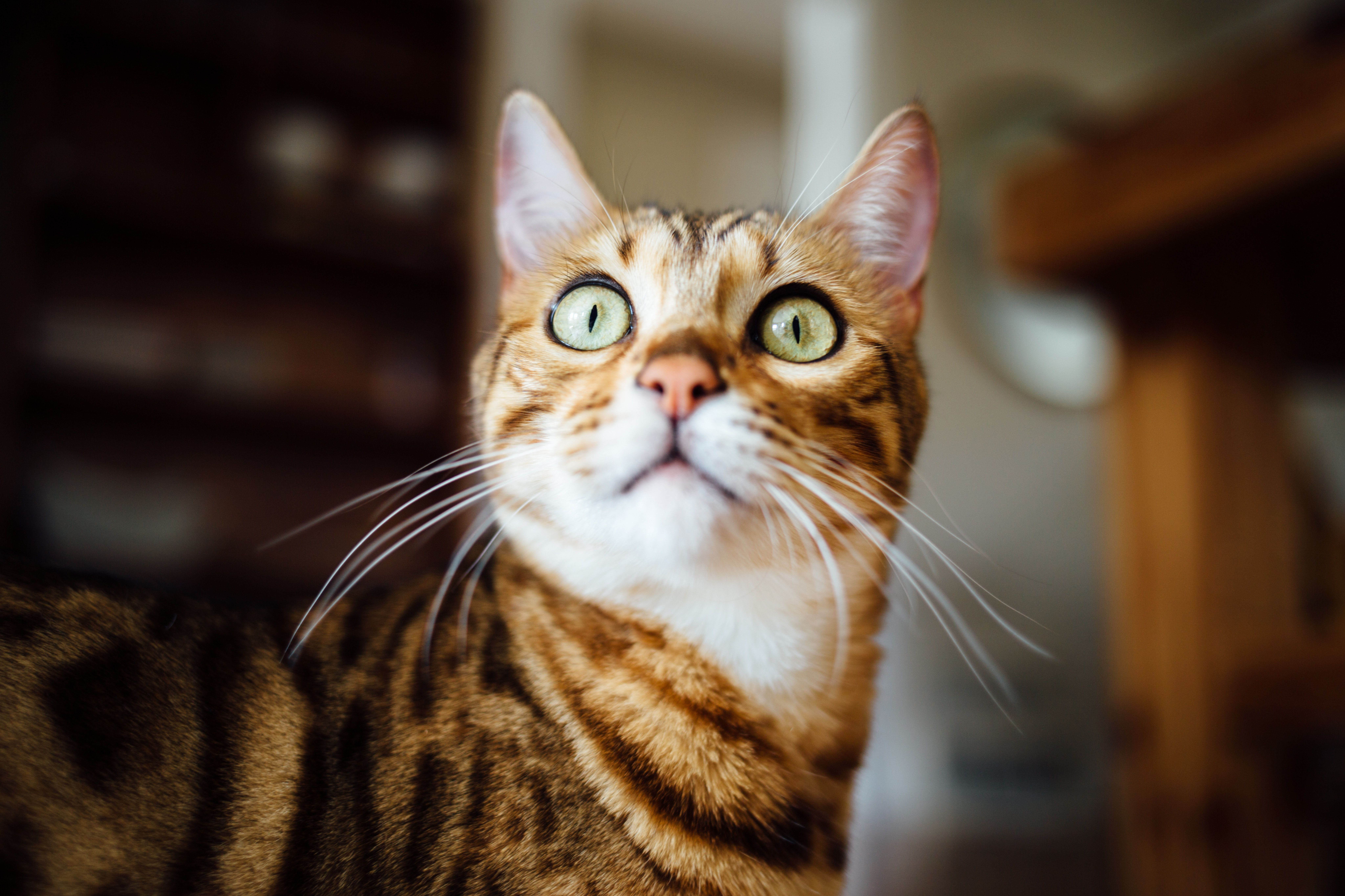 Close Up Of A Ginger Cat S Eyes Growing Wide Cat Sneezing Cats Cat Care