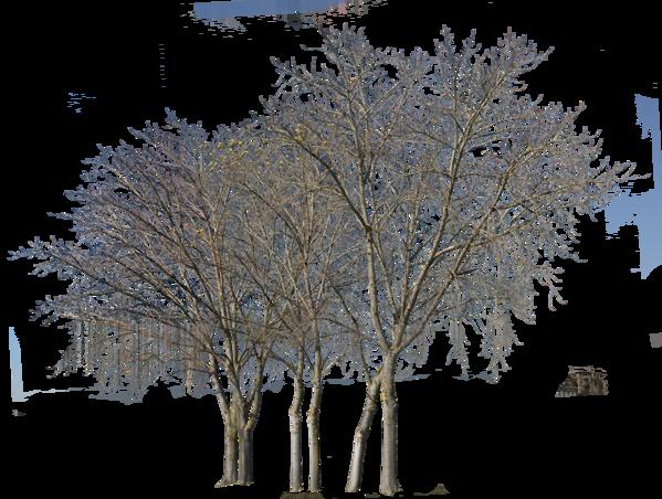 27 Winter Trees Pack Winter Trees Tree Photoshop Landscape Design