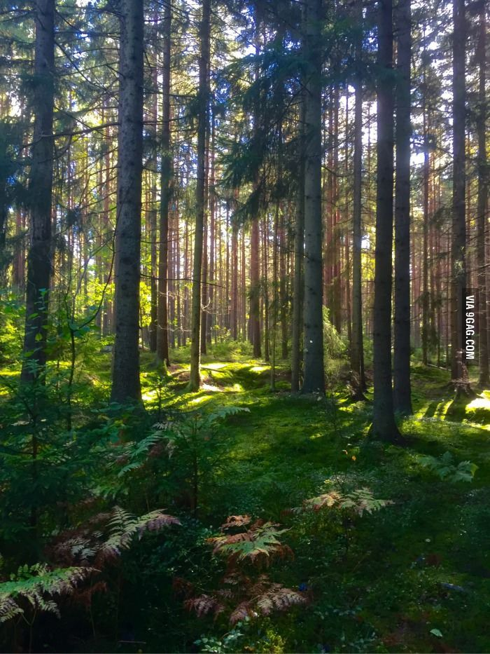 I was running in Sweden and I snapped this photo - 9GAG