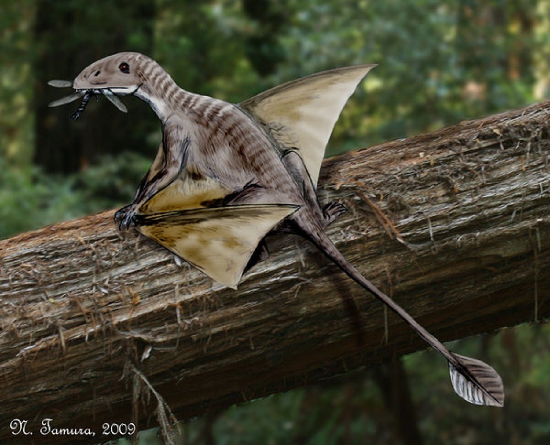 Art illustration - pterosaurs - Peteinosaurus: It is a genus of pterosaur Dimorphodontidae ranforrincoideo of the family. He probably lived on the continent of Pangea in the mid-Triassic Norian (about 221-210 million years ago). He lived on the shores of the ancient Tethys Sea, where today the foothills of the Alps are in northern Italy. has a long tail (20 cm) Their wings were also proportionally lower than those of pterosaurs late.