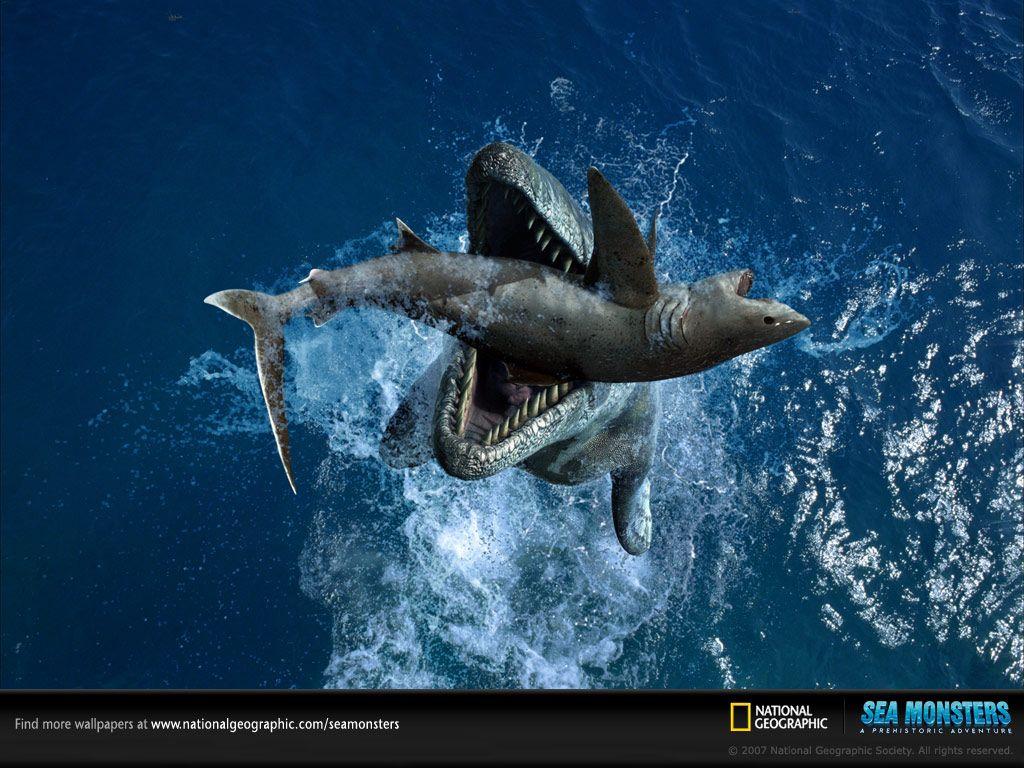 National Geographic Photography Rnstsgyaarnү National Geographic Awar National Geographic National Geographic Wallpaper National Geographic Photography