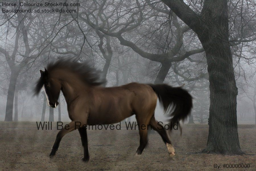 Grulla Horse Images & Pictures - Becuo