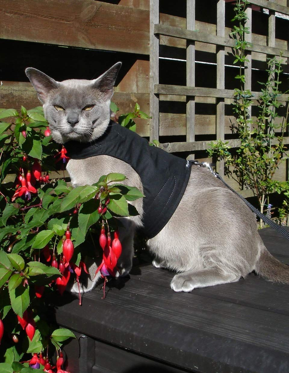 Mynwood Cat Jacket/Harness Black Adult Cat Escape Proof