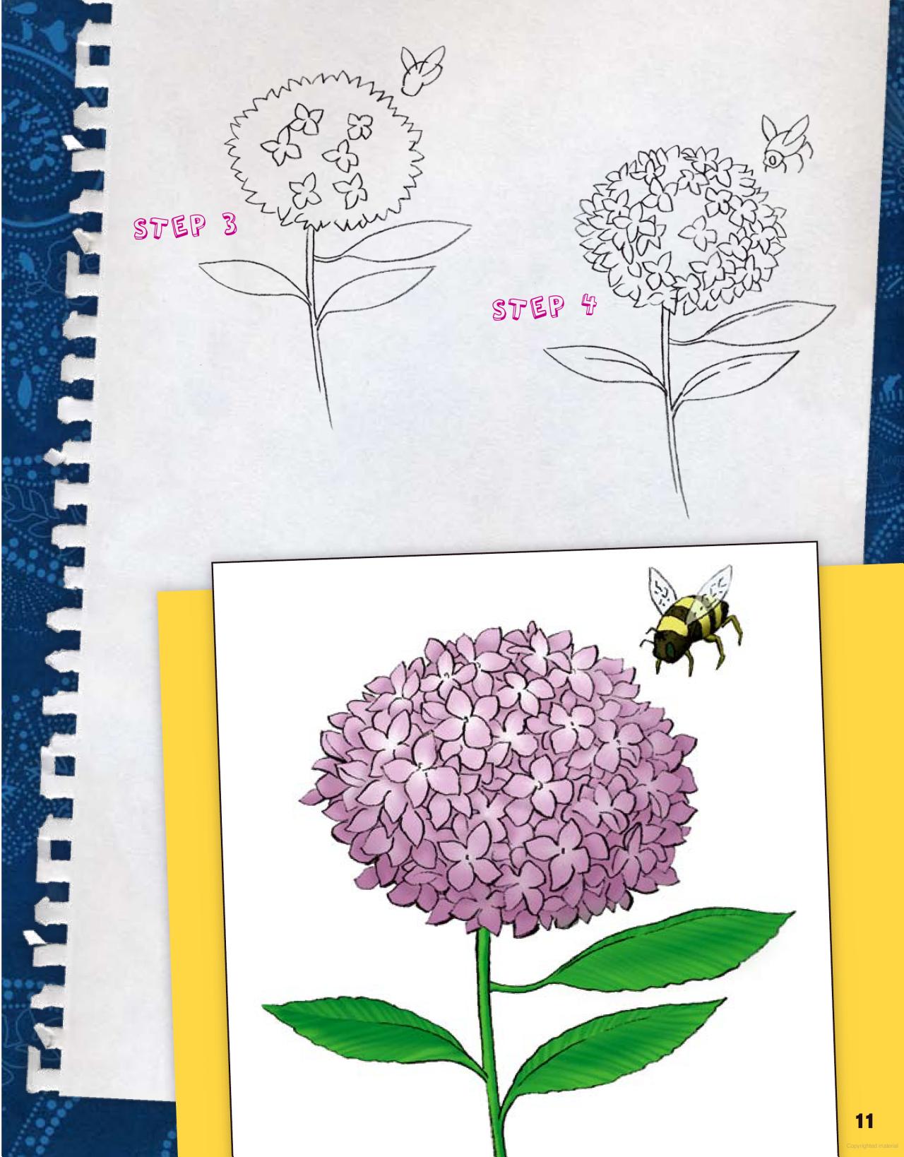 How To Draw Hydrangea