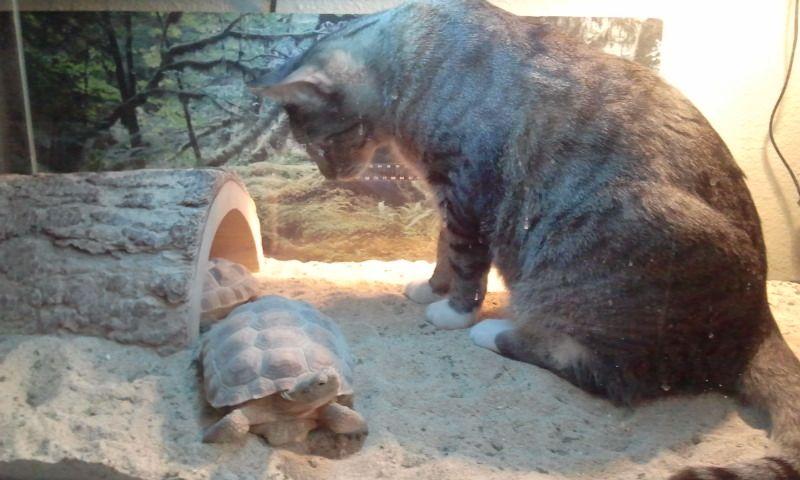 Dexter with tortoise lion sculpture animals sculpture