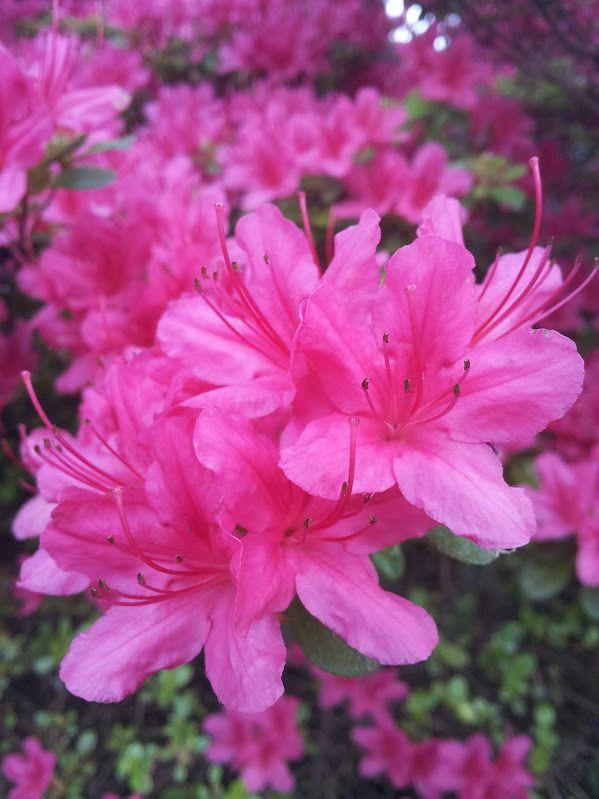 Pin On Garden Secrets