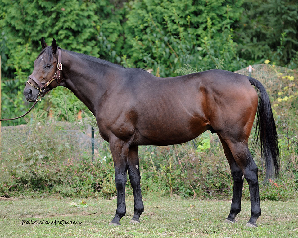 Thoroughbred   rocket-legs-thoroughbred-stallion ...  Thoroughbred   ...