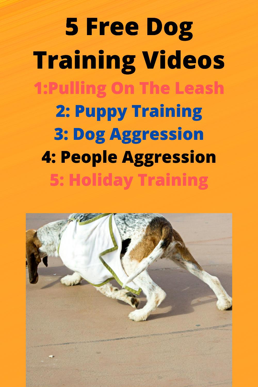 5 Free Dog Training Videos in 2020 Online dog training