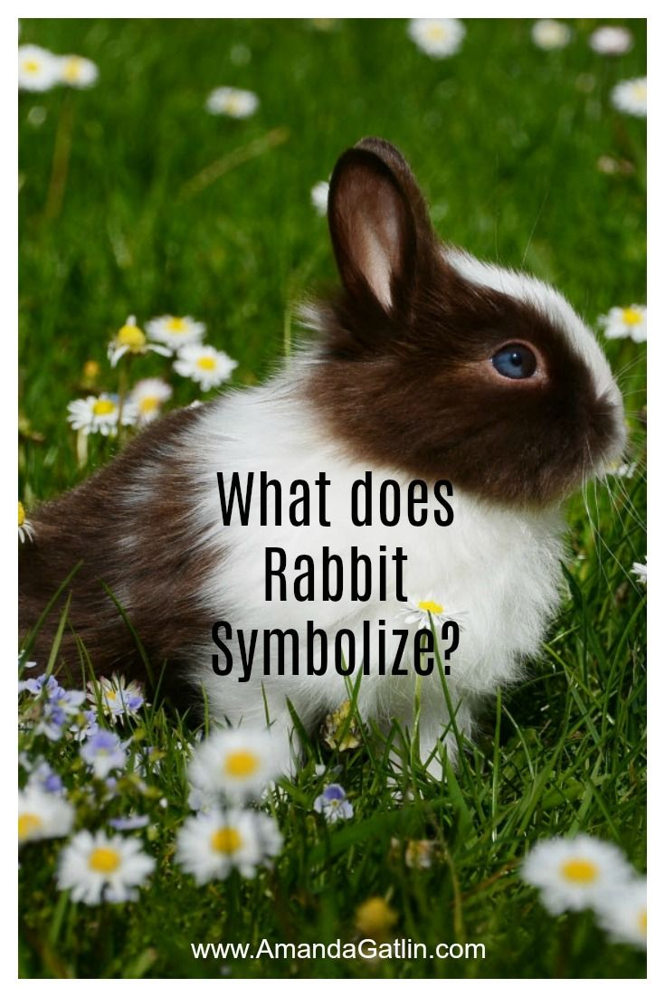 Discover What Animal Totem Rabbit Symbolizes What Is The Meaning Of