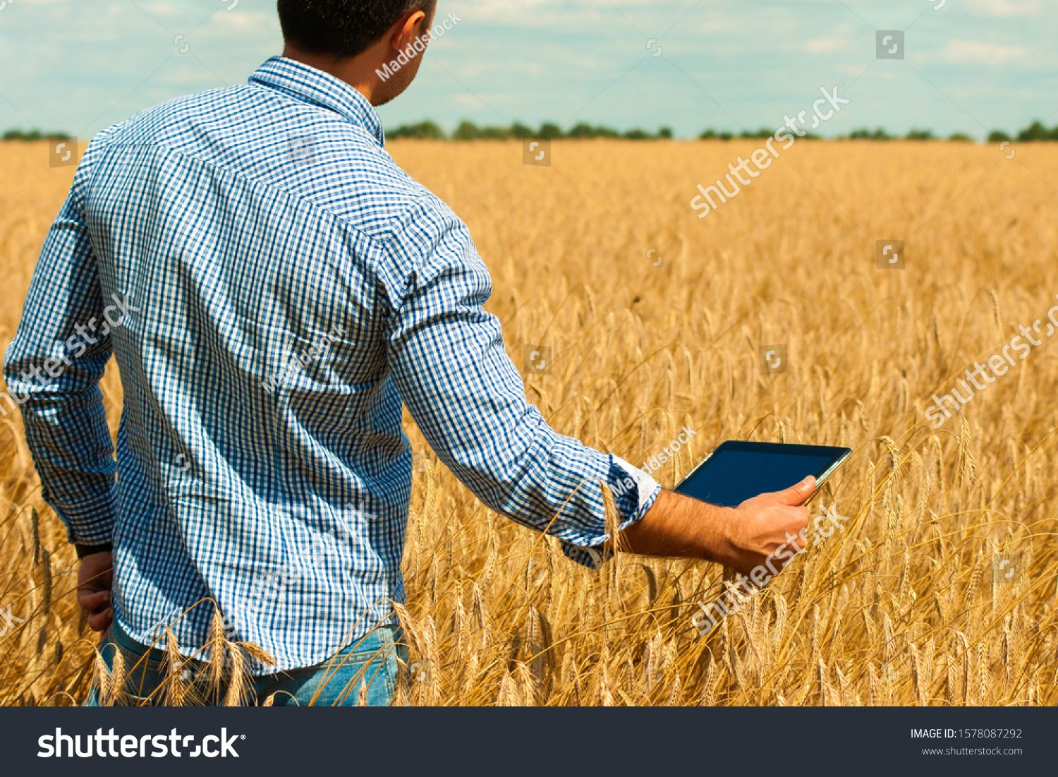Young farmer in check shirt working on his tablet in nature in a golden wheat field. Unification with nature. Harvesting season in the summer #Ad , #spon, #working#tablet#nature#shirt