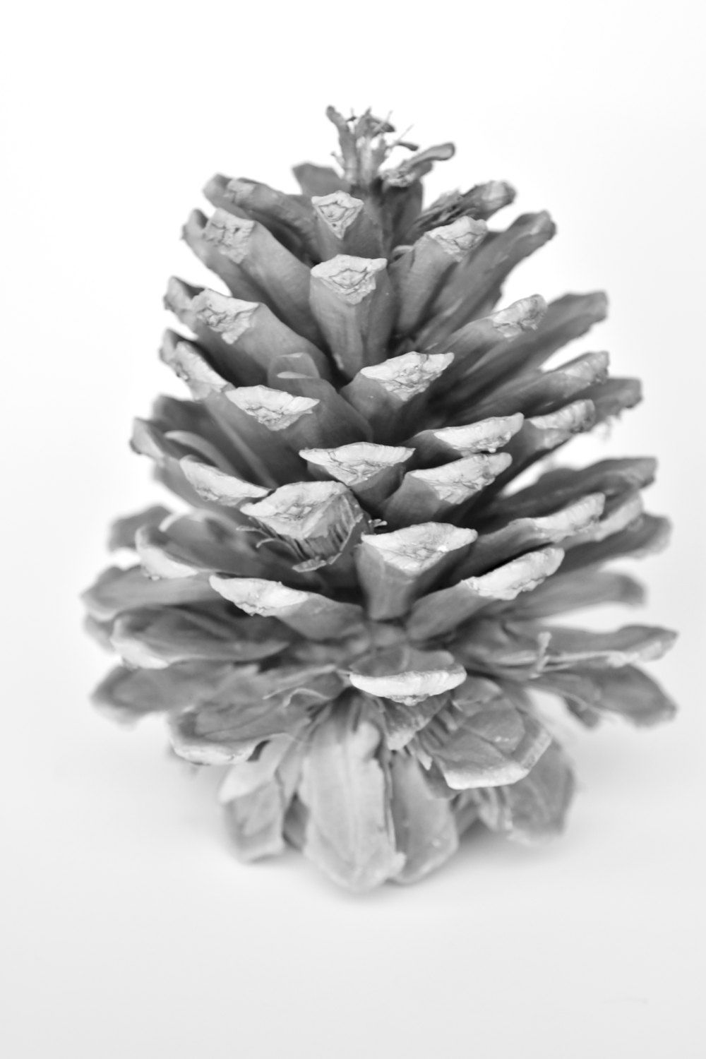 rustic black and white pinecone instant photography