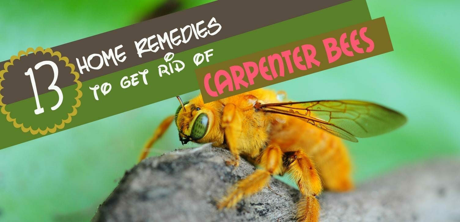 how to get rid of bumble bees that burrow in wood