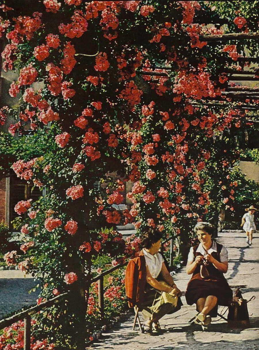 Due ricamatrici s'incontrano nelle prime ore del pomeriggio, a Trieste. National Geographic, giugno 1956