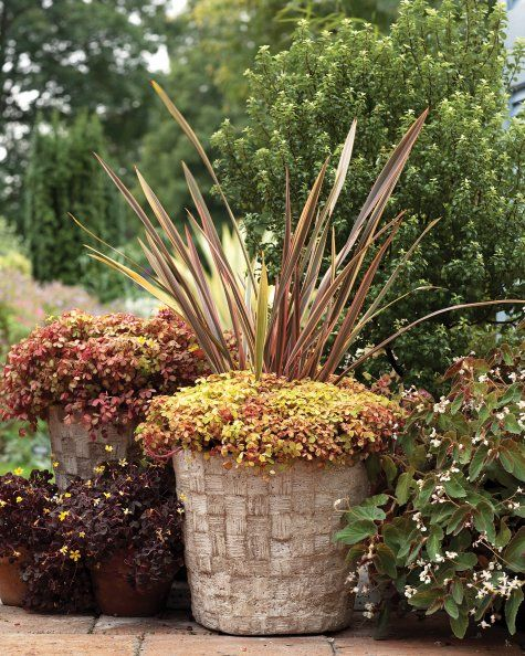 Pots With A Personal Touch Hypertufa Container Garden Planters