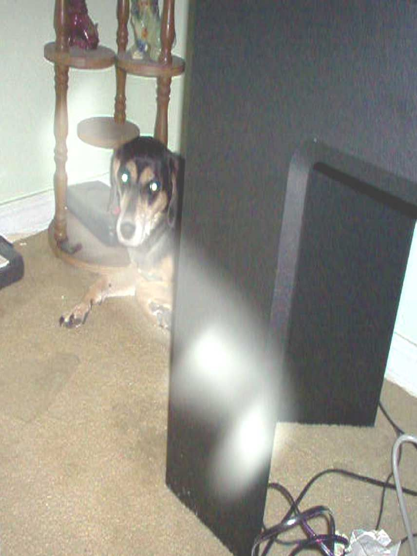Dog With Resident Ghost In Anchorage Alaska
