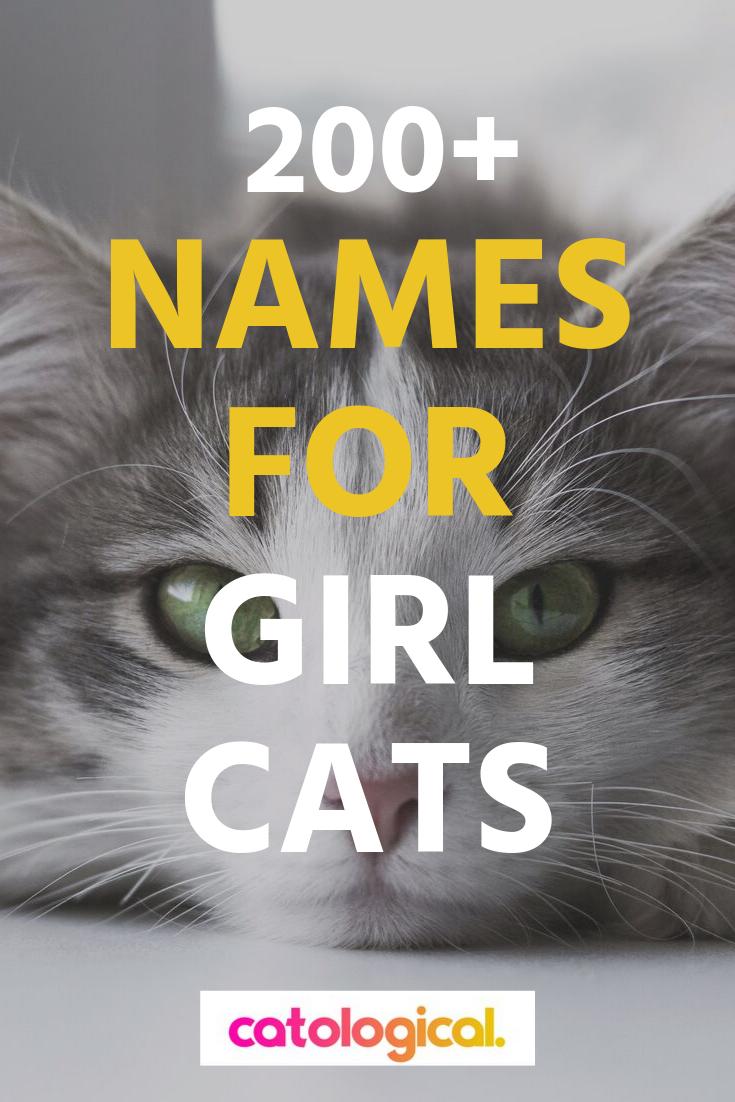 200 Names For Girl Cats Girl Cat Names Funny Female Cat Names Cute Cat Names