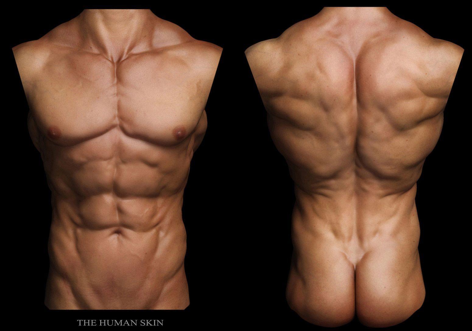 male torso | art -body | Pinterest | Male body, Character design ...