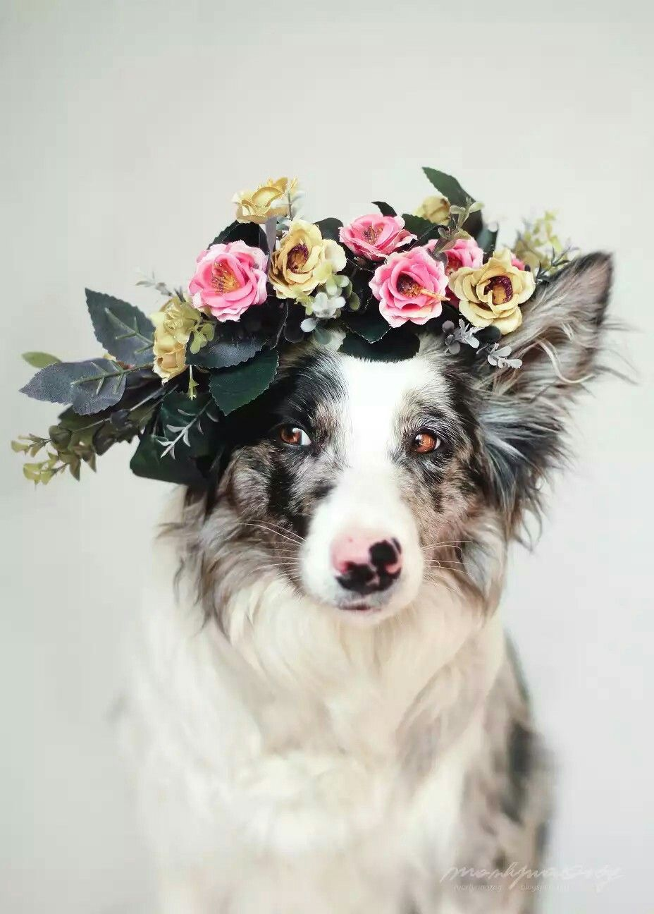 Pin By Holly Folkerts On Engagement Wedding Dog Photography