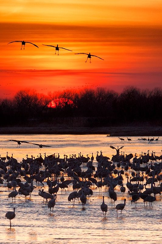 It Was Twilight And Sandhill Cranes >> The Show At Twilight Sandhill Cranes Migrate Through Central
