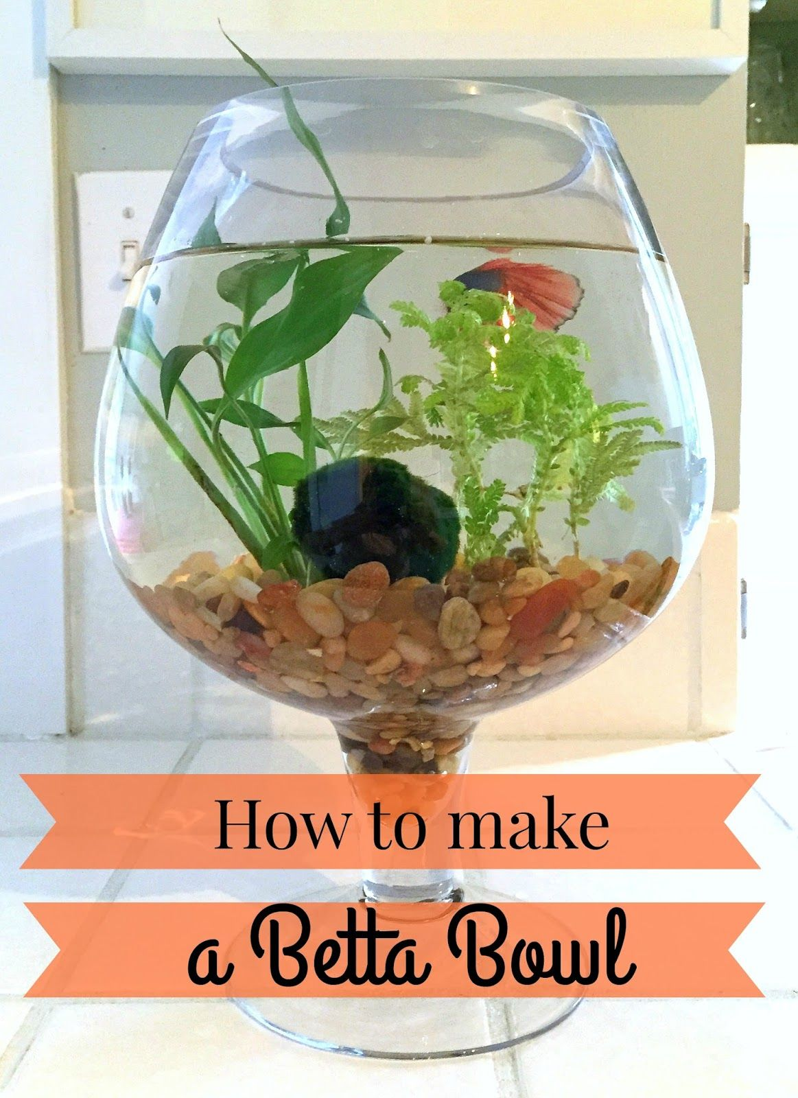 How to make a betta bowl with live plants fish bowl for Beta fish bowl