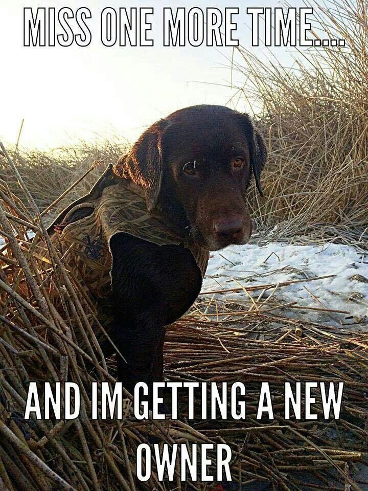 Great description of my dog. | Hunting dogs, Duck hunting humor, Hunting  humor