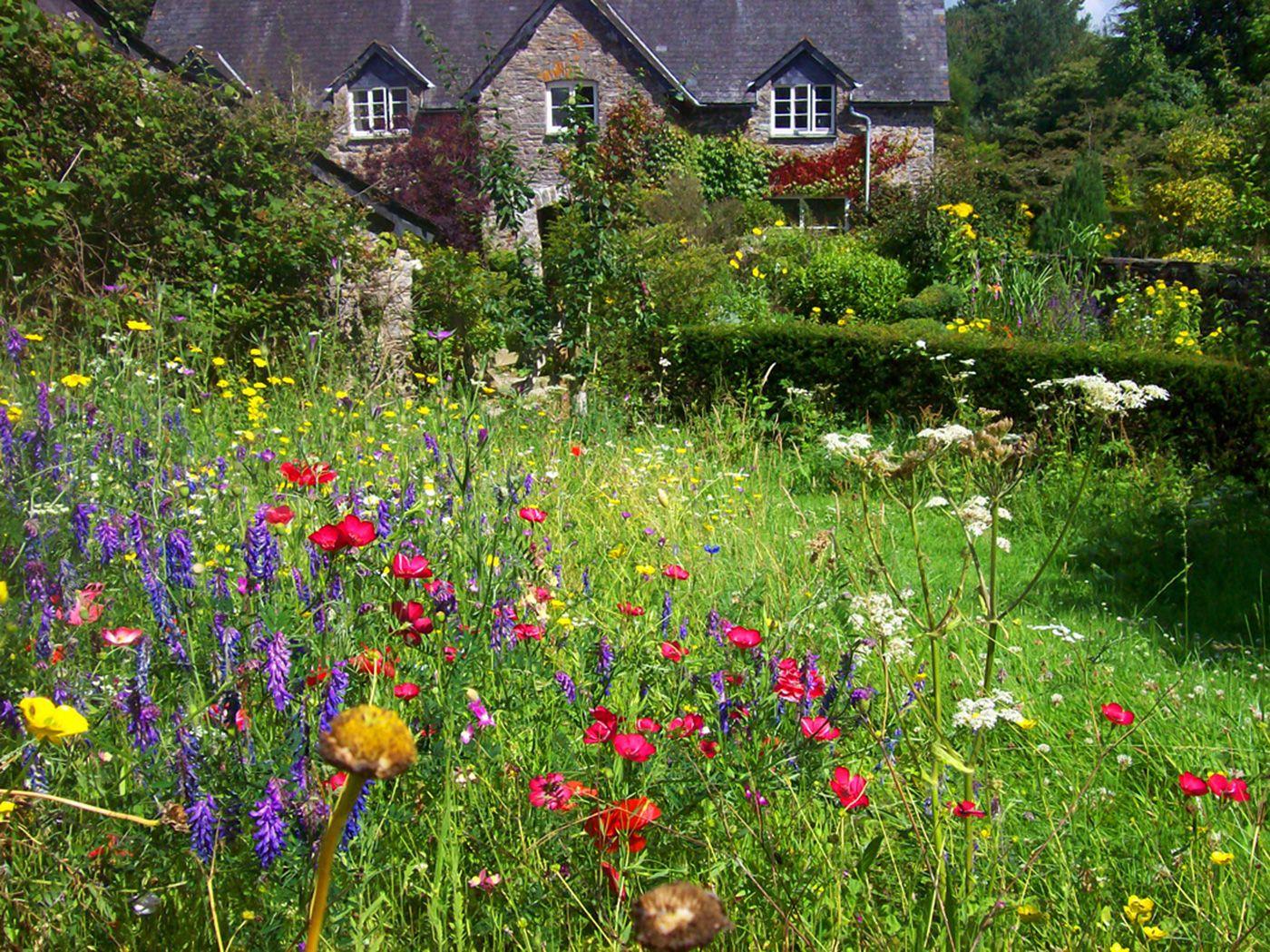 Pin By Gardenlife On Pollinator Garden Ii Beautiful 400 x 300