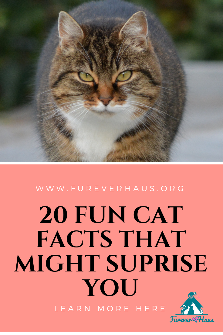 20 Fun Facts About Cats Cat facts, Fun facts about cats