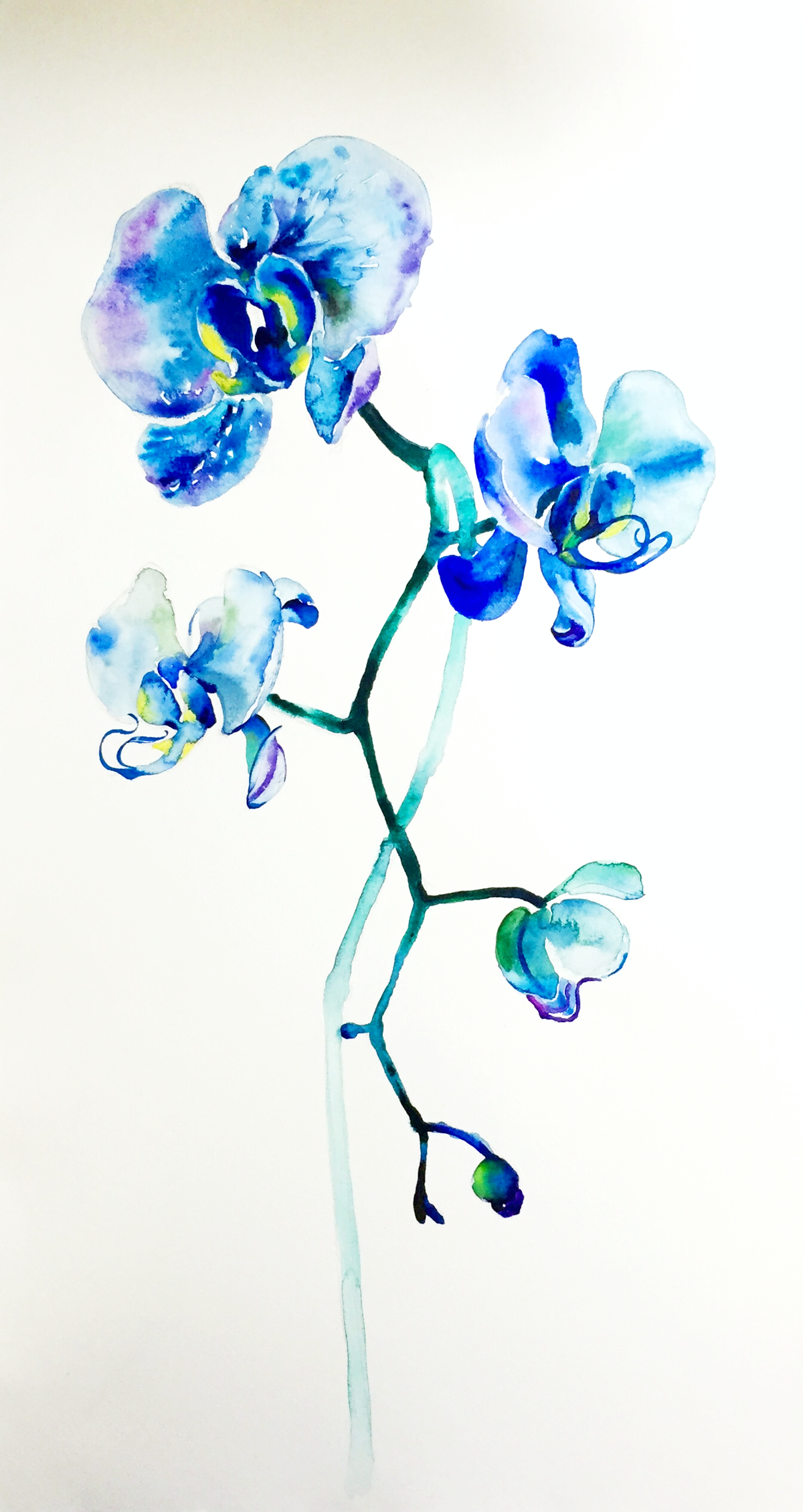 Q Song Blue Orchid Tattoo Orchid Tattoo Watercolor Orchid Tattoo