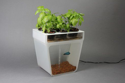 17 Best 1000 images about AQUAPONICS on Pinterest Gardens Pump and