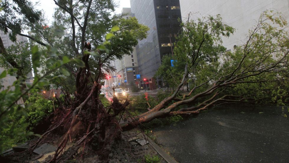 New Orleans, La. An uprooted tree lies across Poydras St