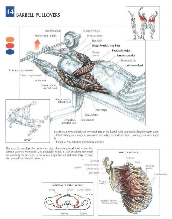 ANATOMY OF A WORKOUT - CHEST #fitness #workout #chest | Chest ...