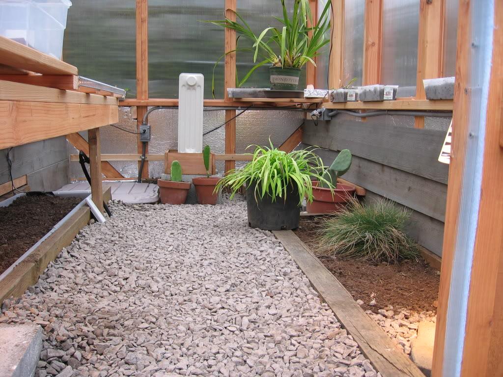 greenhouse for tortoise tortoise pinterest tortoise russian