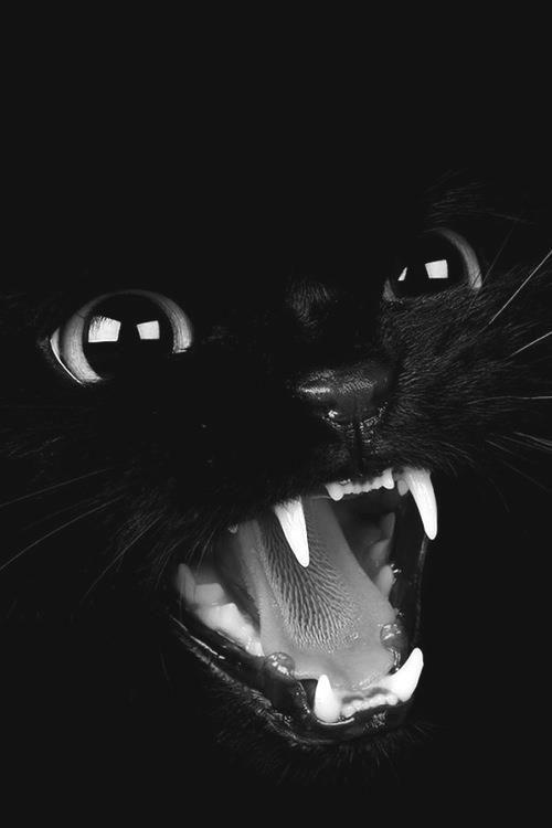 Schwarze Katze Halloween - #black #Halloween #Katze #Schwarze