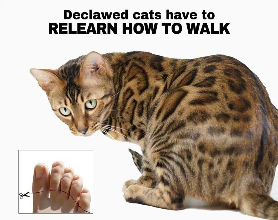 Im against cat declawing. Do not DECLAW your cat