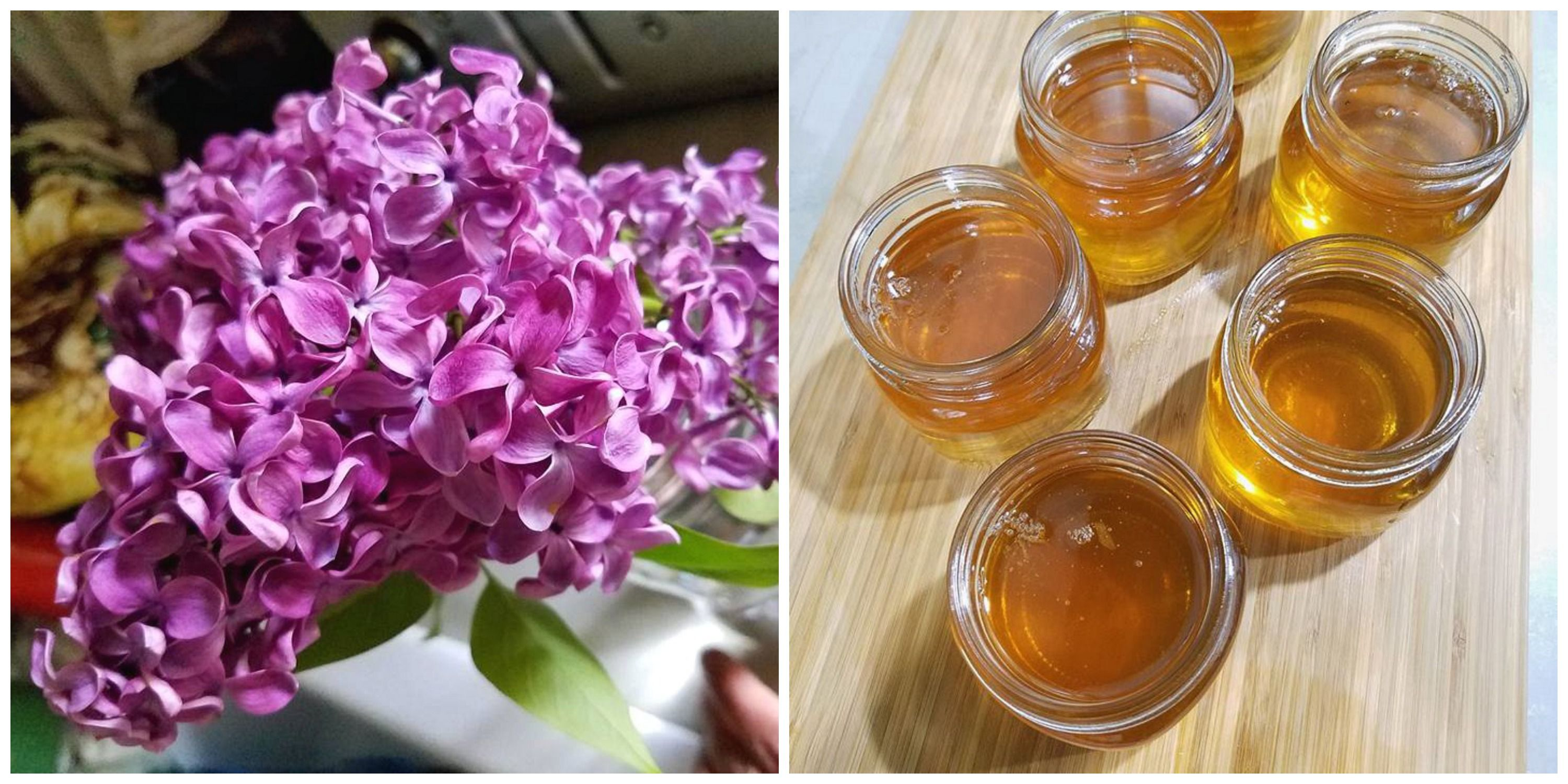 Lilac Flower Jelly A Delightful Floral Jelly A Farm Girl In The Making Recipe Purple Food Coloring Edible Flowers Lilac Flowers