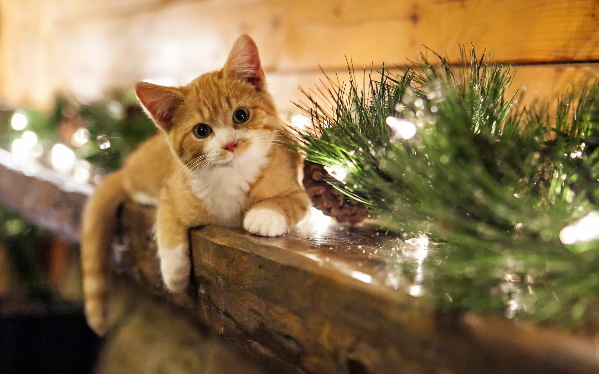 Cats Christmas Kitten Wallpaper Christmas Animals Christmas Kitten
