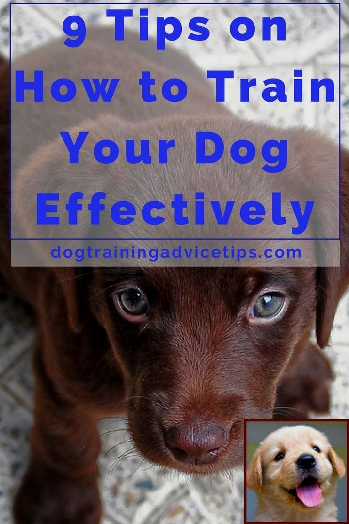 Dog Behavior Training And What Does A Dog Behaviorist Cost Dog