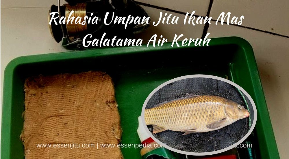 Pin Oleh Destykurniawati Di Aquatic Essen Essen Warna Air Ikan Mas