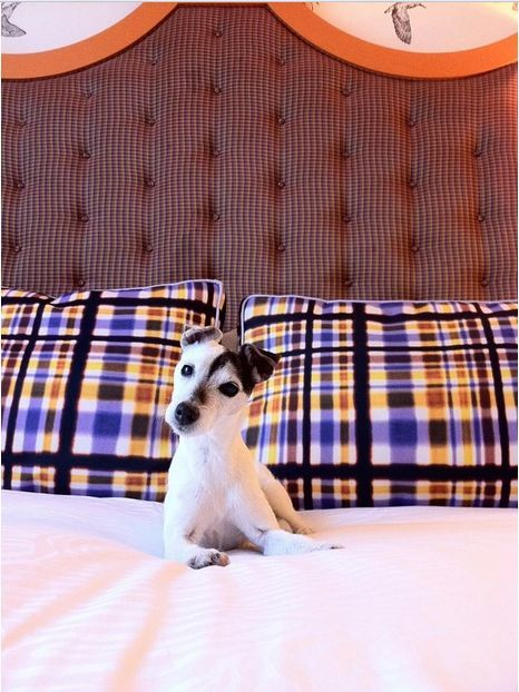 This Pup Is Getting The Royal Treatment At Hotel Monaco Portland All Kimpton Hotels Are Pet Friendly