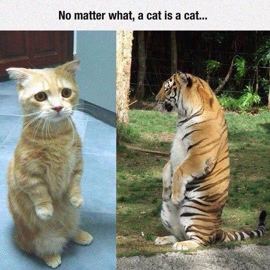 A Cat Is A Cat::No Matter What..