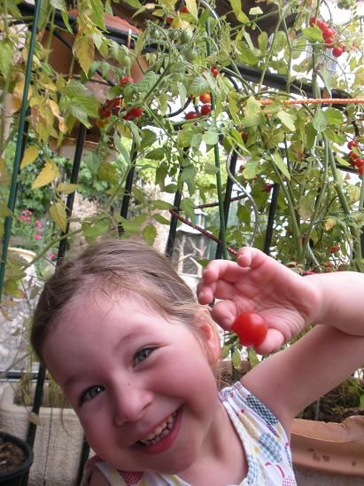Faire Pousser Des Tomates Cerises Sur Son Balcon Ou Terrasse