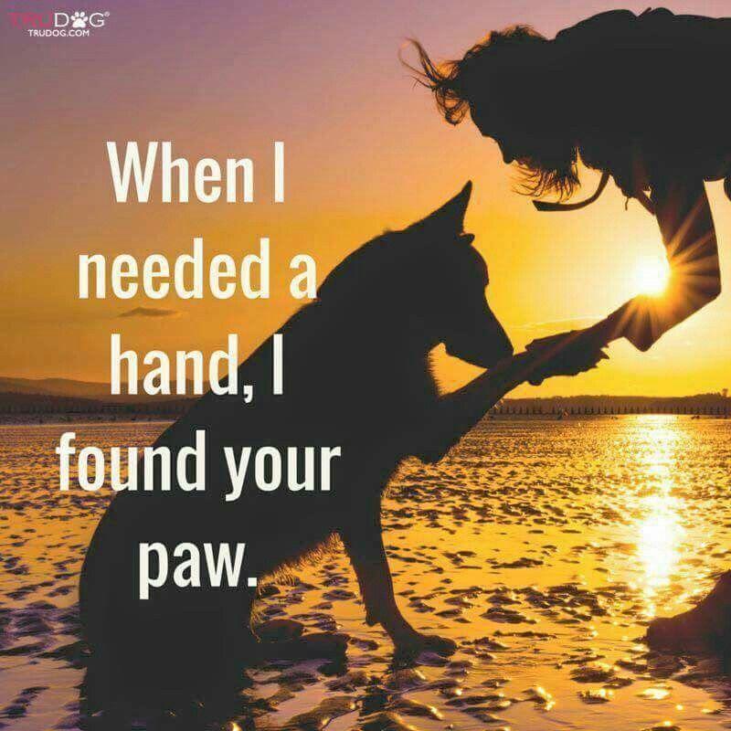 My Emotional Support Animal Esa Domestic Violence Survivor 414