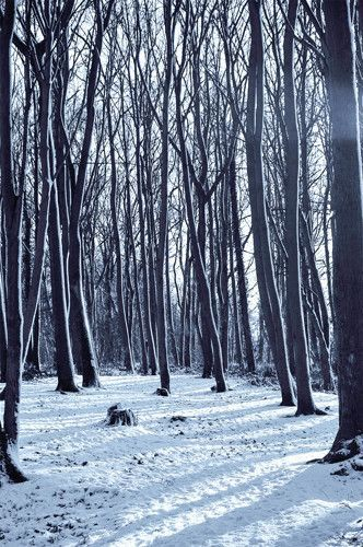 6797 Creepy Snow Forest Printed Backdrop Iphone 6 Plus Wallpaper Wallpapers Phone Backgrounds