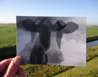 Postcard Cow (designed by MargOntwerp)