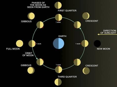 A Diagram Showing The Phases Of The Earth S Moon Photographic Print Stocktrek Images Art Com Full Moon Effects Next Full Moon Lunar Cycle